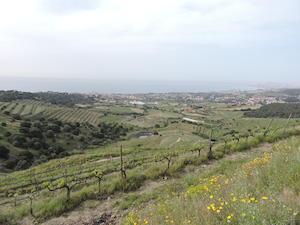 Vall de Rials